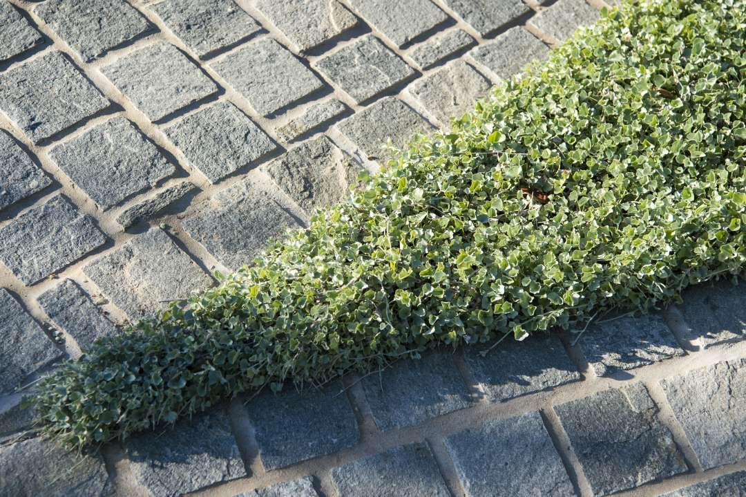 Loden Quartz Cobblestones
